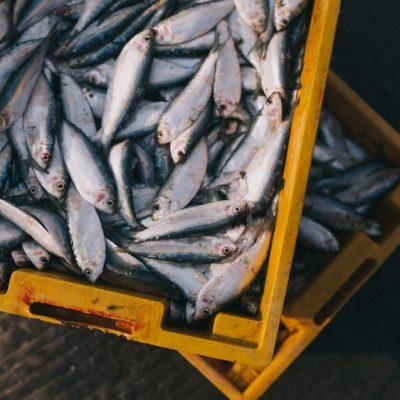 criação de peixes como fazer tanque de peixe com lona