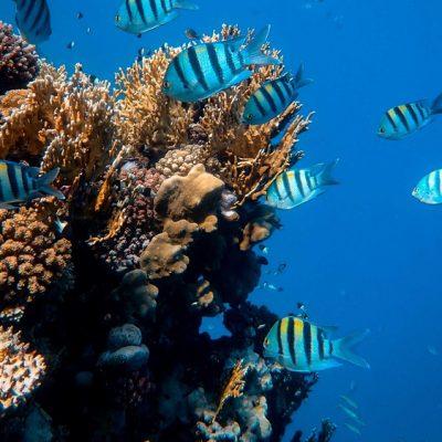 Criação de Peixe em Tanque